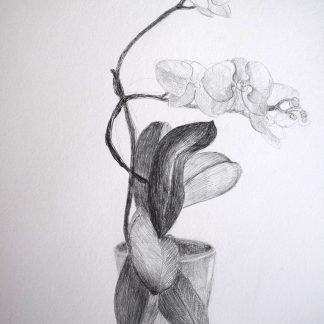 Drawings For Sale